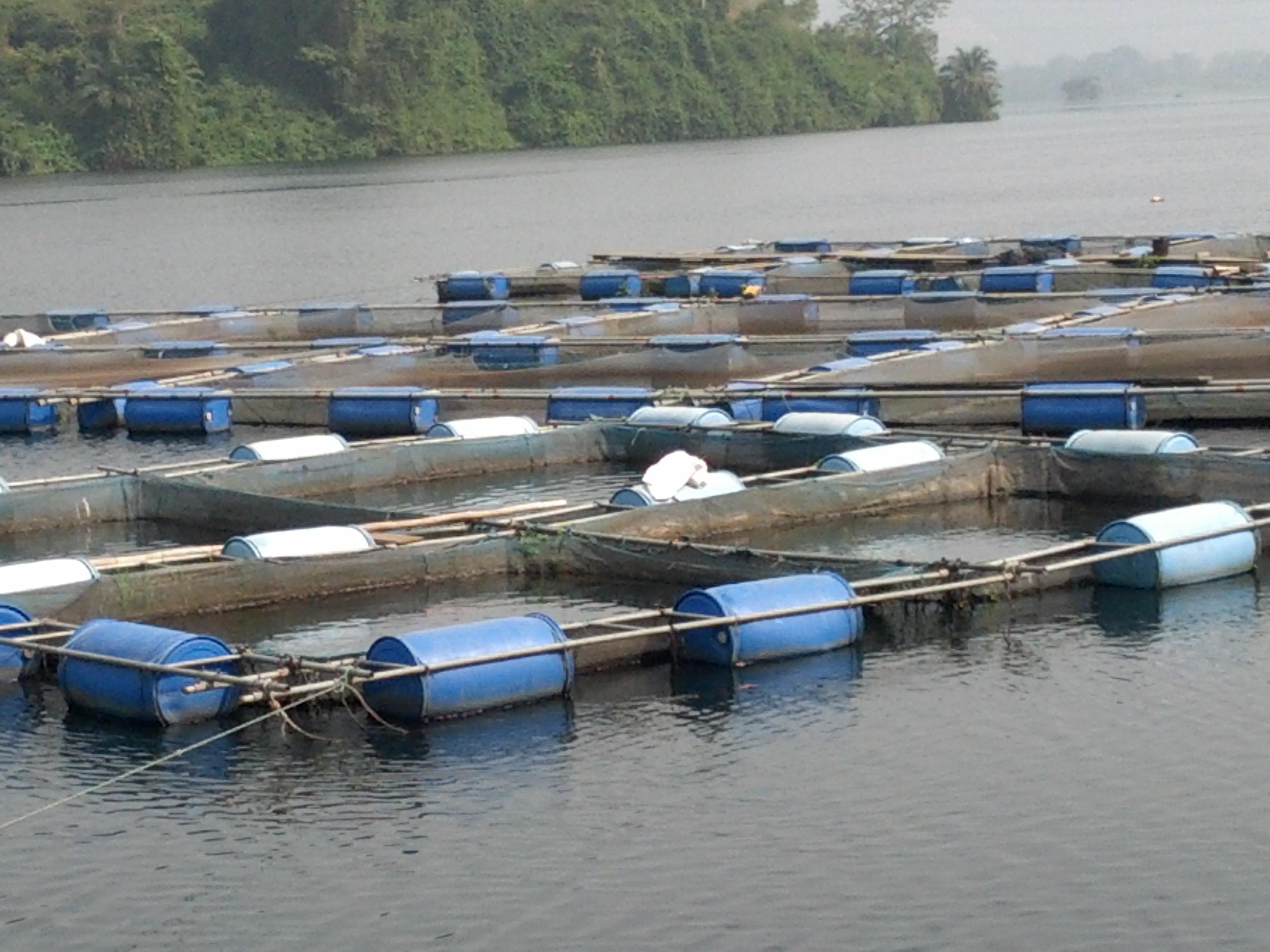 Farmerline launch press release indigo trust for What is fish farming