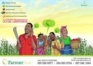 Farmerline Flyer